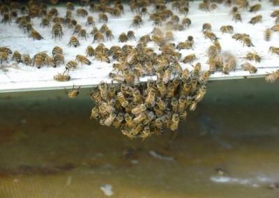 bin på fluster1