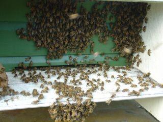 bin på fluster2